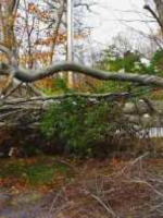 tree debris in calvert county